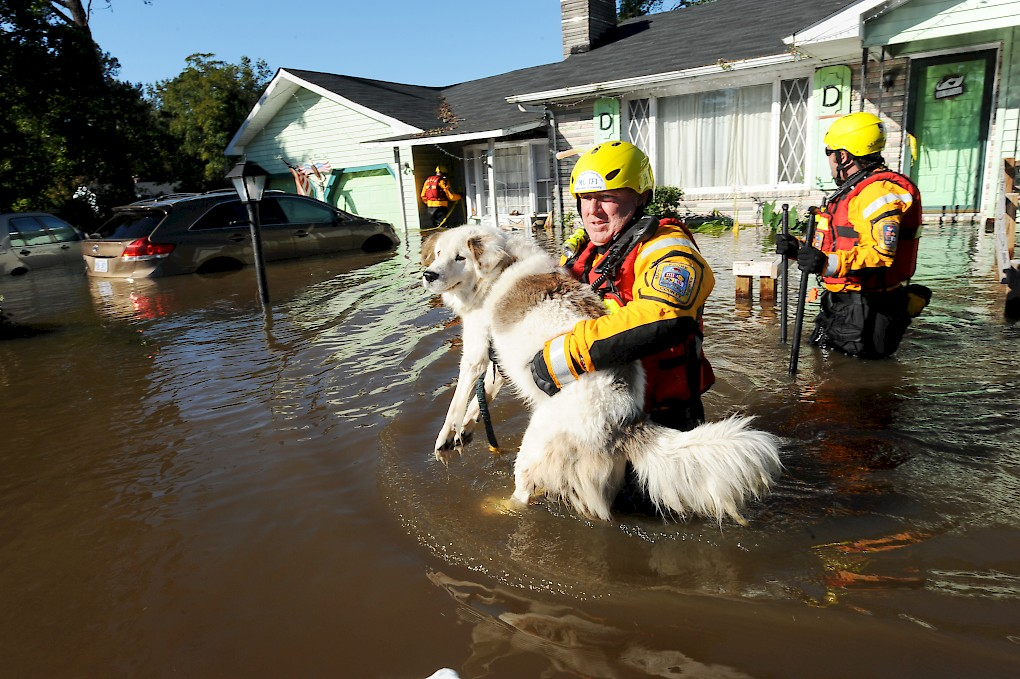 Planning for Animals in an Emergency Management Strategy